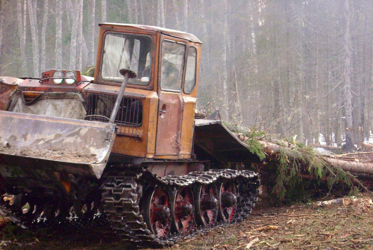 Заготовка вологодского леса