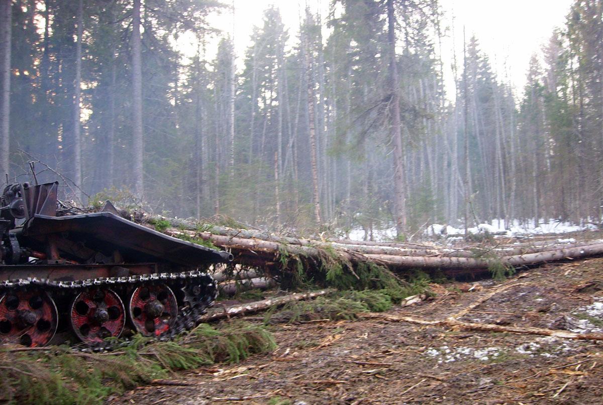 Вологодский лес для срубов
